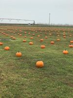 Elementary Pumpkin Patch A Huge Success